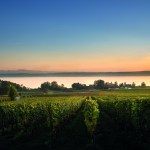 Regional Foodhunter (I): Weinberg-Kräuter in der Bodensee-Region