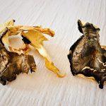 Pilz Rezepte und Buchbesprechung: Das Geheimnisvolle Leben der Pilze