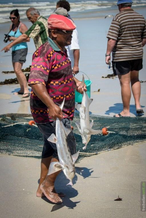 Fischer mit Beute Fish Hoek