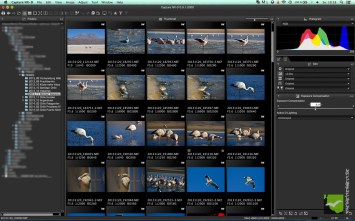 Capture NX-D Thumbnails