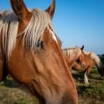 Motocast 3- Wilde Pferde, ein Luxusleben und meine Gedanken dazu