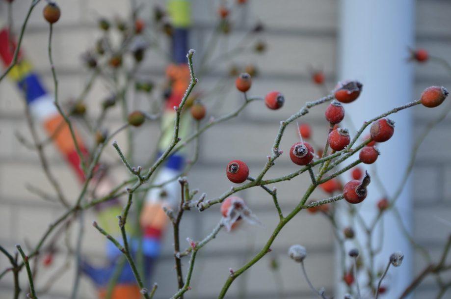 Frostiger Gartentag