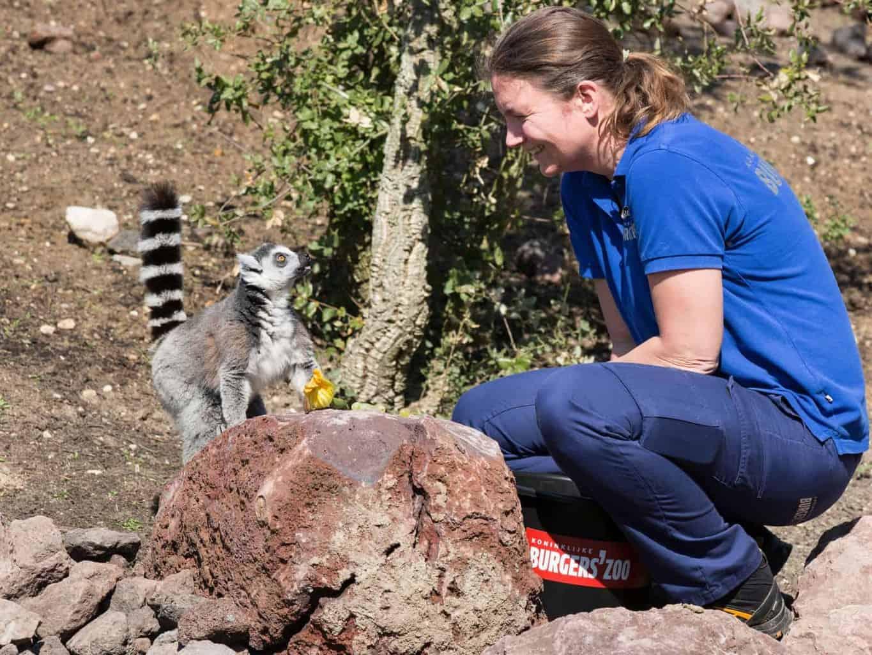Neues Zuhause für die Kattas und Mohrenmakis im Burgers´ Zoo