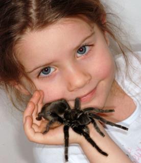 Auf Kuschelkurs: Der Biss der Vogelspinne ist nicht gefährlicher als der Stich einer Biene. - Foto: Araneus