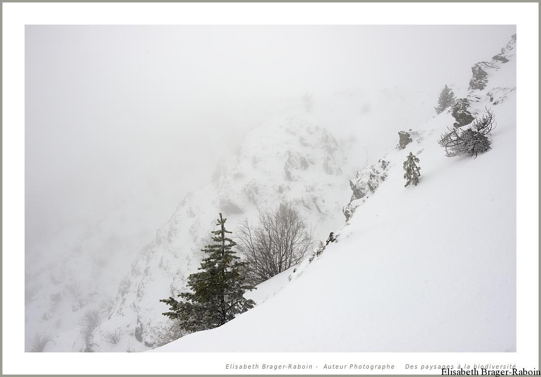 Les Pentes du Mont Aigoual enneigée.