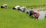 india farmers in africa