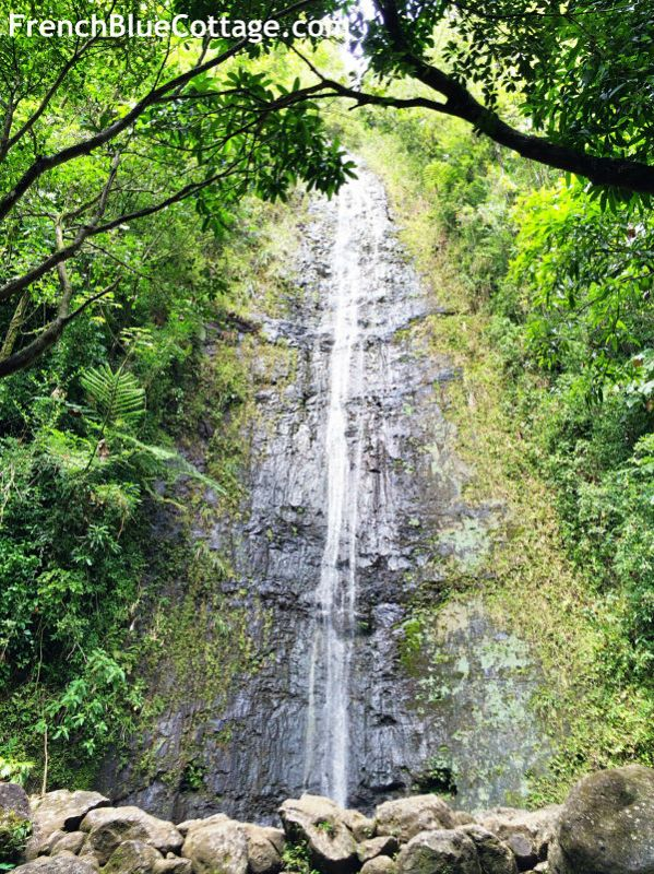 manoa falls hawaii_opt