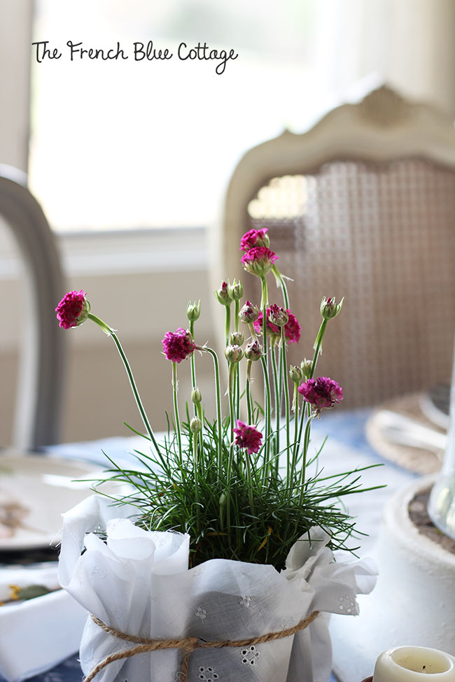 Potted flowers wrapped in fabric.