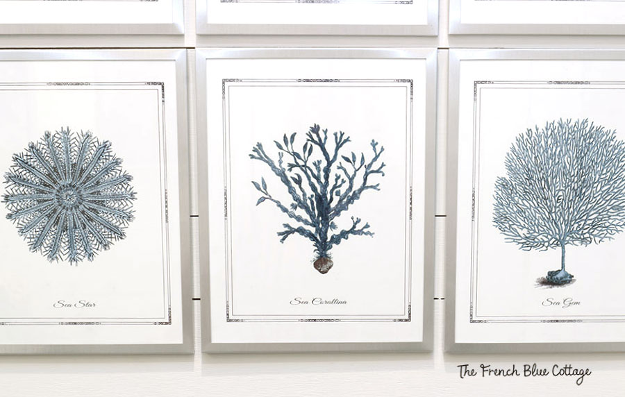 blue and white sea fan artwork in silver document frames