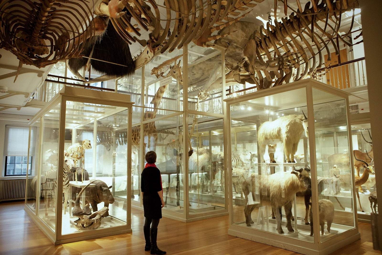 Visite du muse dhistoire naturelle de Harvard