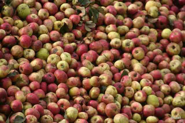 Normandy apples