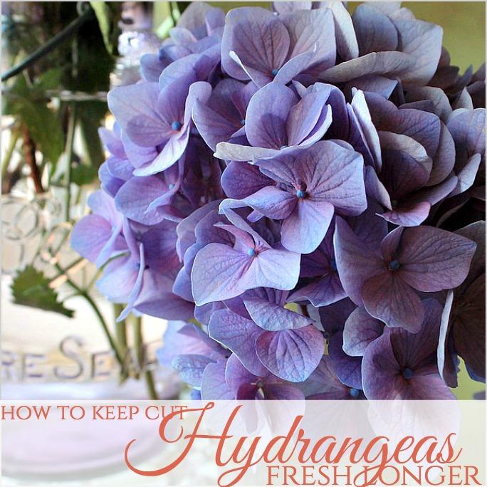 How to Keep Cut Hydrangea Flowers Fresh Longer