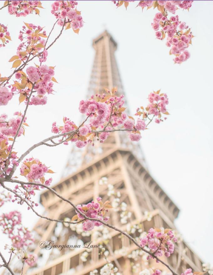 EiffelTowerPinkBlossoms
