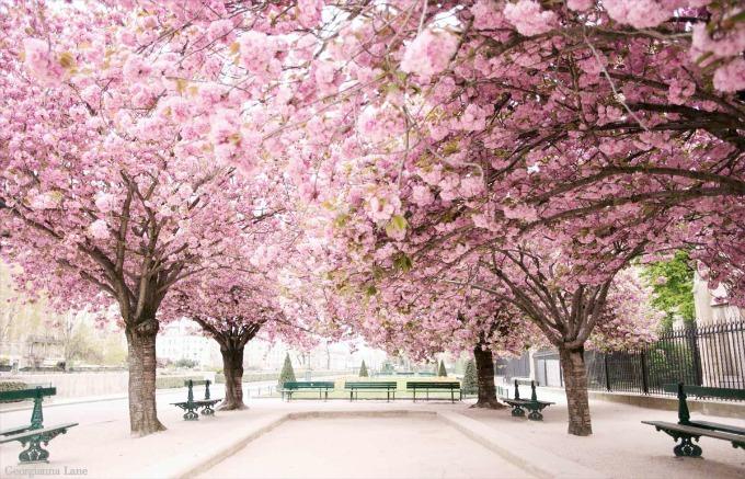 Paris-in-Bloom1