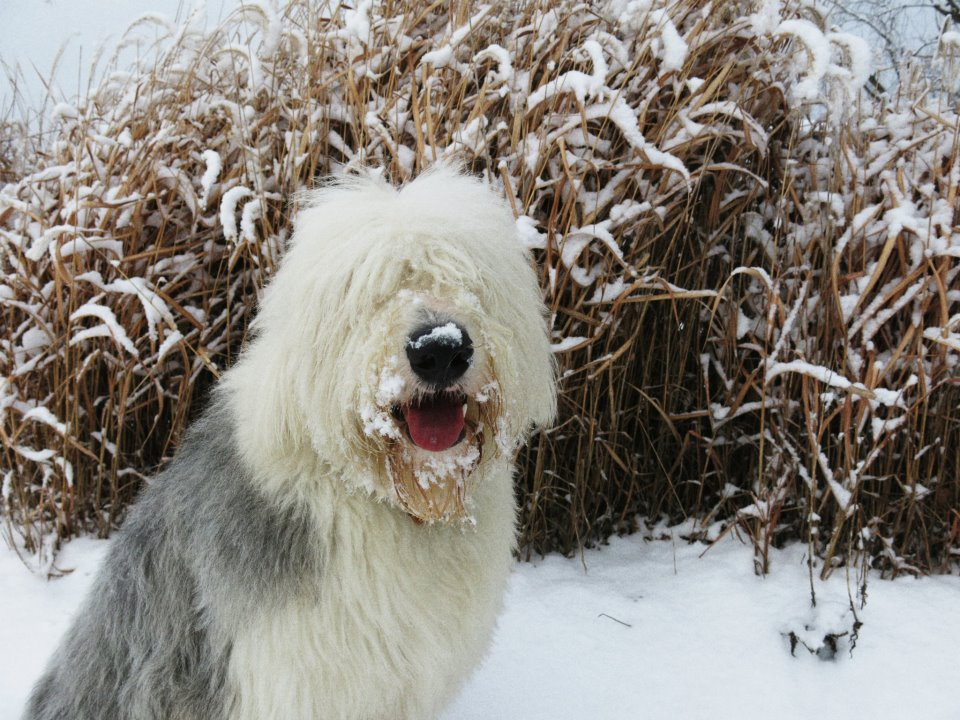 say cold dog in french