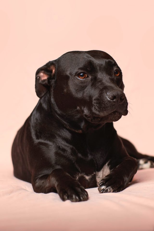 dog joint pain