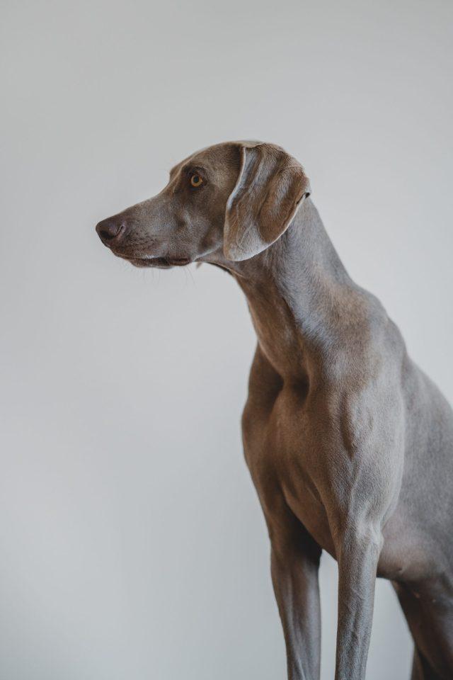ailments that affect senior dogs