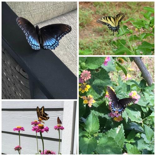 Butterfly in Texas