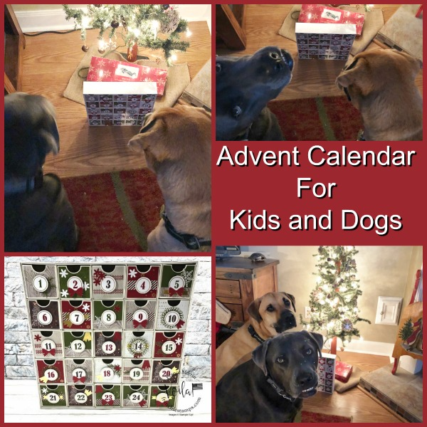 Advent Calendar for Kids and Dogs.