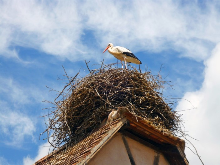 White stork at the Ecomusée d'Alsace © French Moments