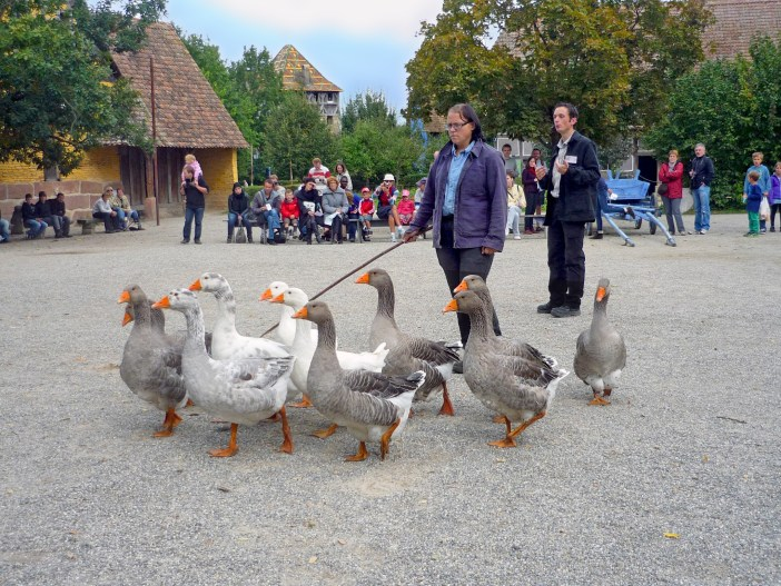 Geese at the Ecomusée d'Alsace © French Moments