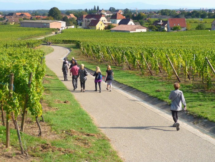 Walking in the vineyards between Kaysersberg and Kienthzheim © French Moments