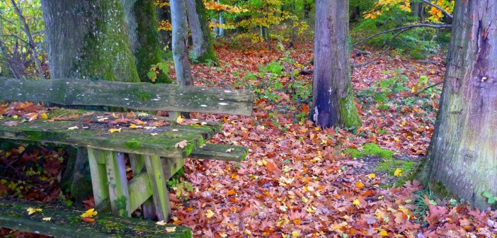 French forest in autumn © French Moments 02