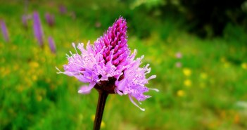 Heath Spotted-orchid © French Moments