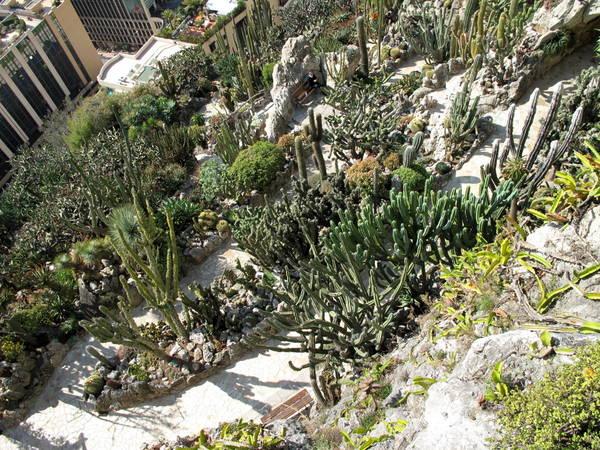 Monaco Exotic Garden 2 by Tangopaso (Public Domain)