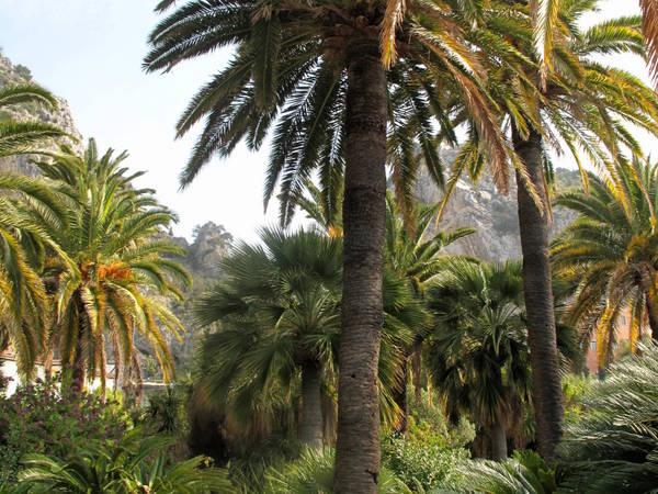 Palmtree struck by shells (Maria Serena) by Tangopaso (Public Domain)