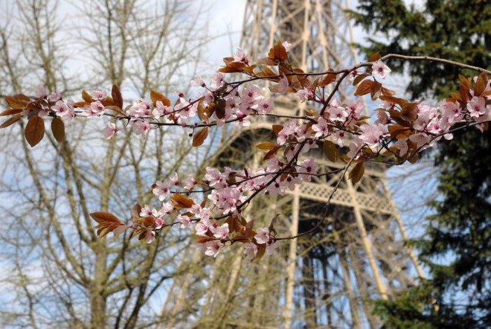 Spring at the Eiffel Tower 11 copyright French Moments