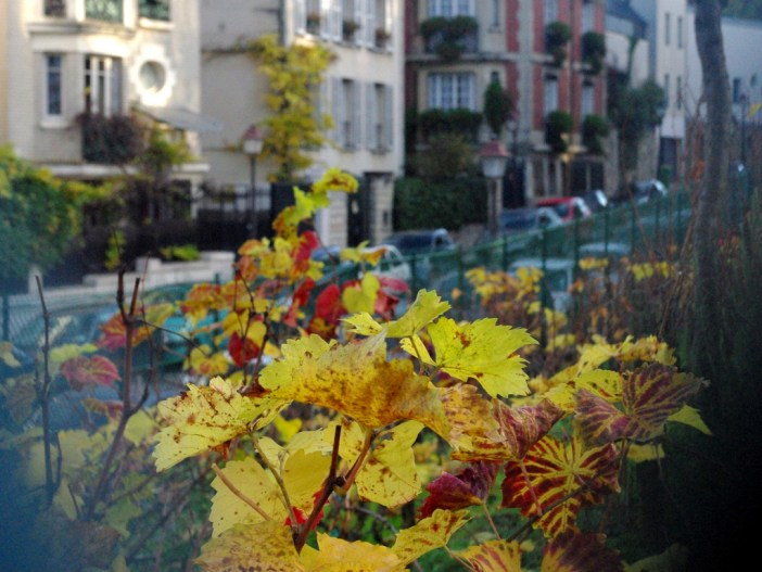 Vineyard of Montmartre in Autumn 03 © French Moments