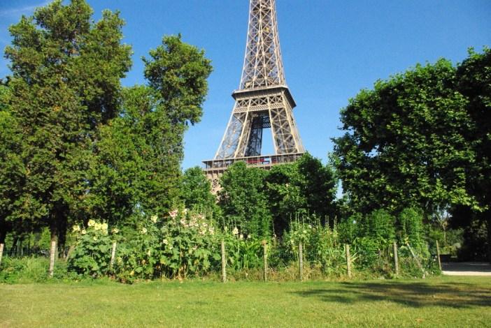 Champ de Mars Paris June 2015 08 © French Moments