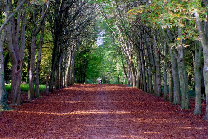 Forest of Saint-Germain-en-Laye © French Moments
