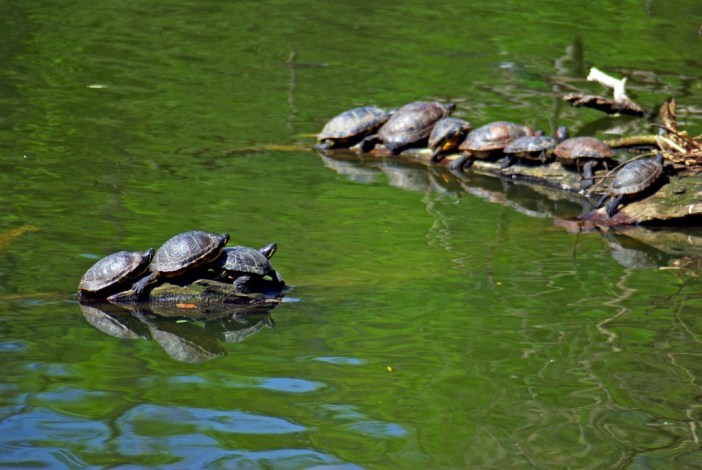 Terrapins at the Edmond de Rothschild Park © French Moments