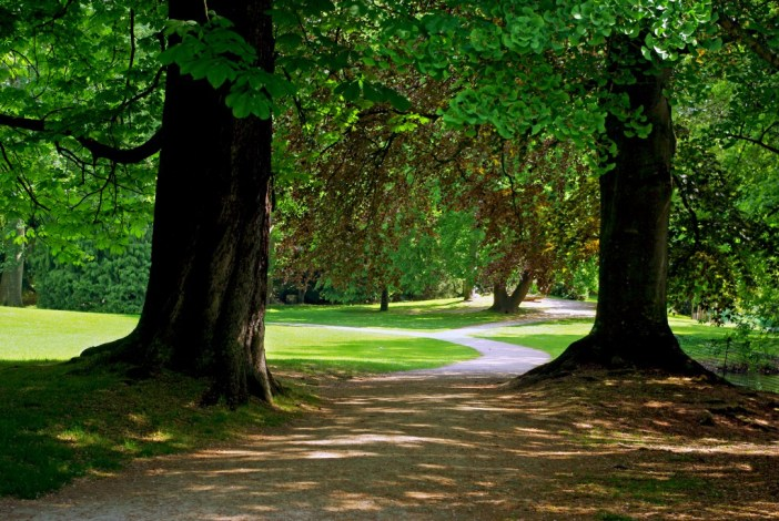 Magnificent trees in the Parc de Boulogne © French Moments