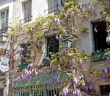 Wisteria Ile de la Cité Paris © French Moments