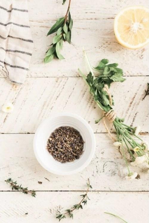 Les bienfaits des plantes : alliées bien-être et santé
