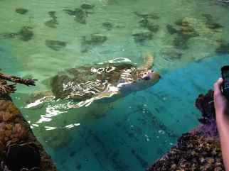 large-turtle-bransen