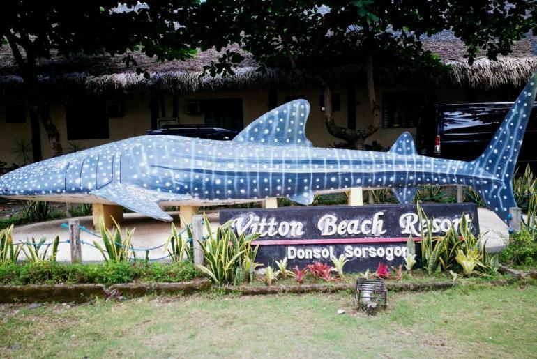 Requin Baleine ou Whale Shark
