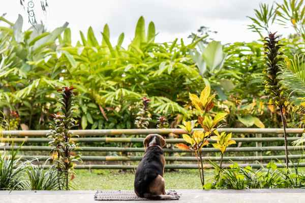 dog sitting on rug overlooking green leafed plants