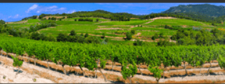 vineyard view from hotel in Vacqueyras