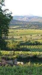 Chateau Villatade vines