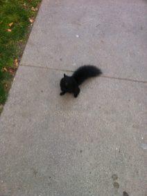 ecureuil-toronto