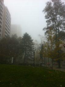 high-park-brume