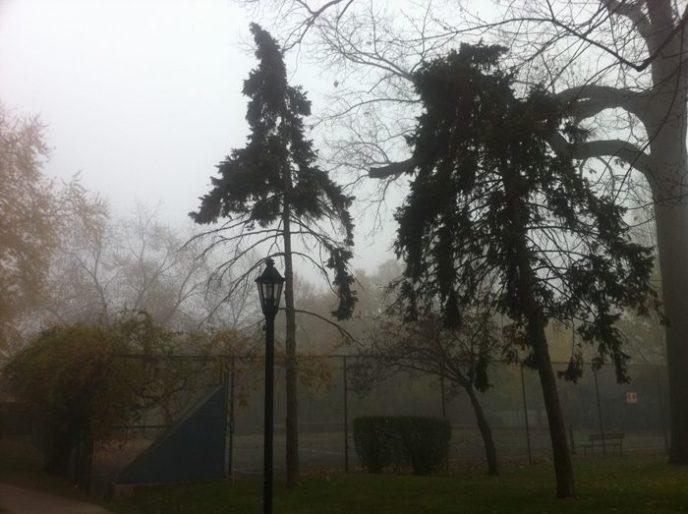 sapins-dans-brume-toronto