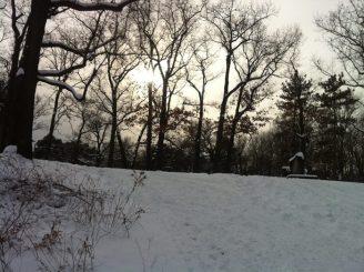 foret-high-park-neige