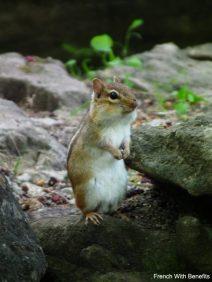 ecureuil2-conservation-halton