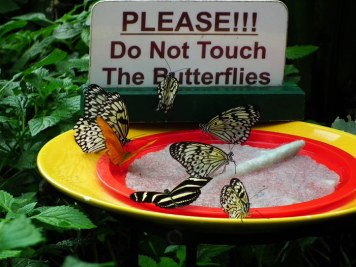 please-do-not-feed-the-butterflies