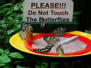 please-do-not-feed-the-butterflies